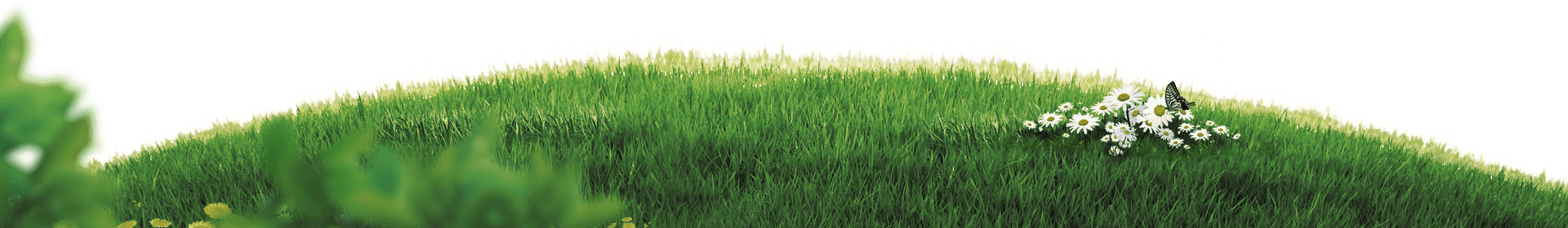 motion-grass.png